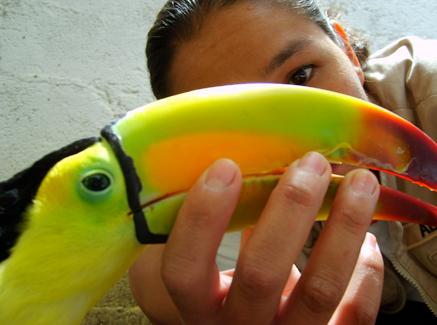 Examinando el pico del tucán