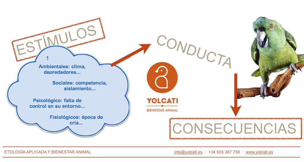 Puntos de modificación de la conducta en loros. Yolcati