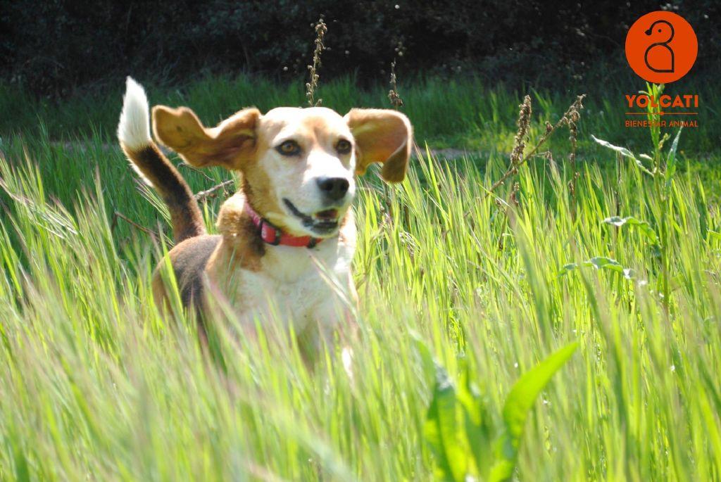 Rocco perrito feliz. Yolcati